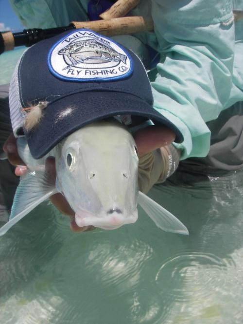 Bonefish representing Tailwaters Fly Fishing Company.  Photo By:  David Leake